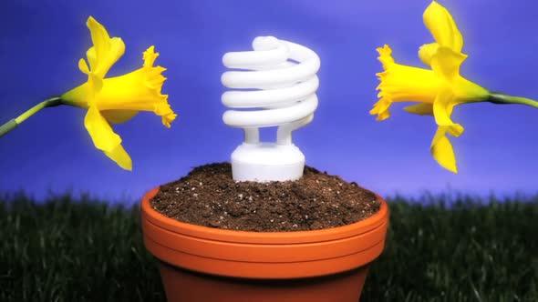 Energy Saving Light Bulb Planted 2