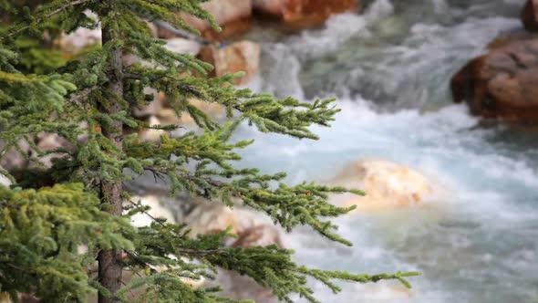 Tokkum Creek And Pine Tree