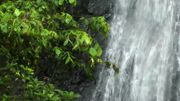 VideoHive Waterfall In Rainforest 2 11836475