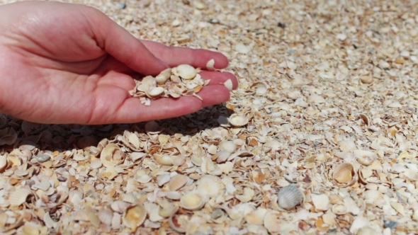 A Man's Hand Takes Seashells On The Beach