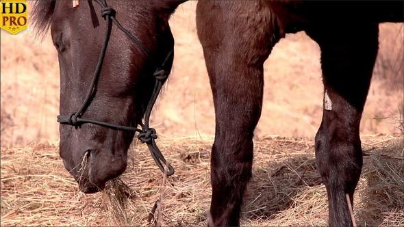 A Black Horse Enjoying the Grass