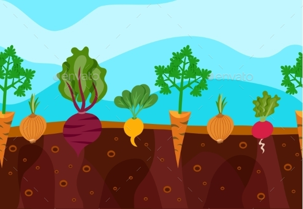 GraphicRiver Growing Vegetables Illustration 11847509