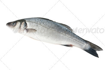 sea bass isolated