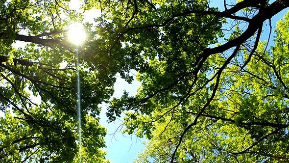 Sun Through Green Trees