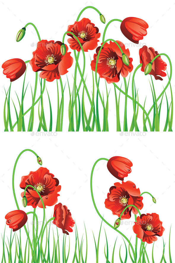 GraphicRiver Poppy Flowers with Grass 11850988