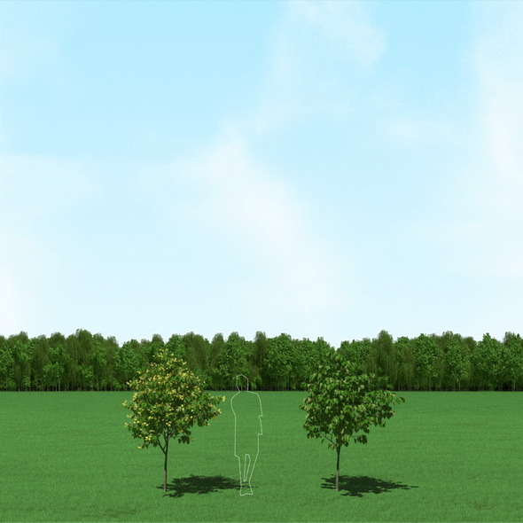 Blooming Tilia (Linden) Trees 3d Models - 3DOcean Item for Sale