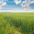 green field and blue sky with clouds - PhotoDune Item for Sale