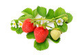 strawberries and green leaves - PhotoDune Item for Sale