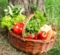 Bio Vegetables and Green Herbs Basket Freshly Picked from the Ga
