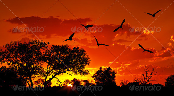 Landscape of Africa with warm sunset - Stock Photo - Images