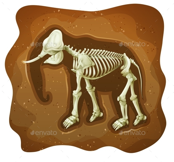 GraphicRiver Fossil 11872579