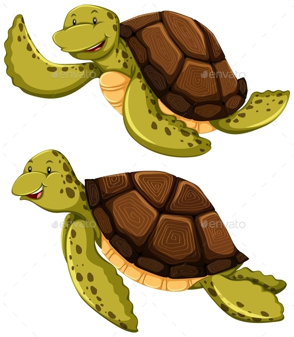 GraphicRiver Turtle 11872836
