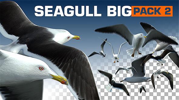 Seagull Big Pack 2