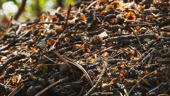 Ants Running Around the Anthill 4