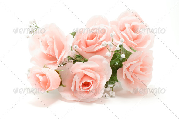 Pink Roses - Stock Photo - Images