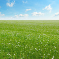 field with flowering flax and blue sky - PhotoDune Item for Sale