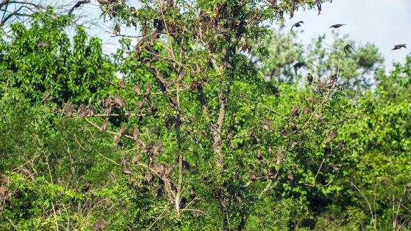 Flock Of Birds Flying In Green Trees