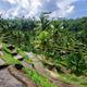 Terrace rice fields on Bali, Indonesia - PhotoDune Item for Sale