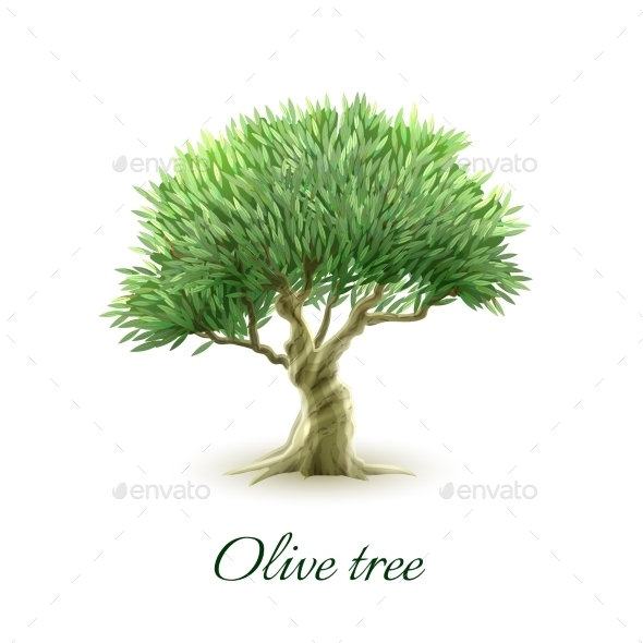 GraphicRiver Single Olive Tree Picture Print 11891926