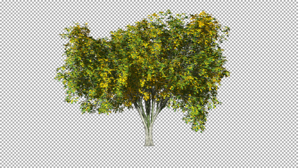 Tree On The Wind Isolated 3