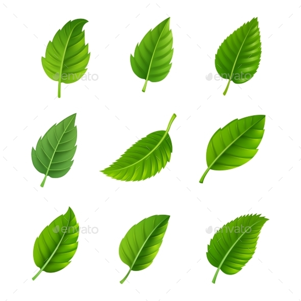 GraphicRiver Green Leaves Decorative Set 11895315