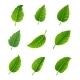 Green Leaves Decorative Set - GraphicRiver Item for Sale
