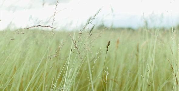 Summer Wind In The Meadow