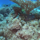 Murena on Coral Reef - VideoHive Item for Sale