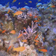 Tropical Fish on Vibrant Coral Reef - VideoHive Item for Sale