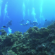 Group of Divers Swims Over Coral Reefs - VideoHive Item for Sale