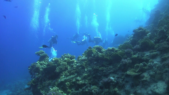 Group of Divers Swims Over Coral Reefs