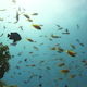 Colorful Fish on Vibrant Coral Reef - VideoHive Item for Sale