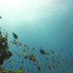 Diver Swims Over Coral Reefs - VideoHive Item for Sale