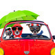dog driving a car - PhotoDune Item for Sale