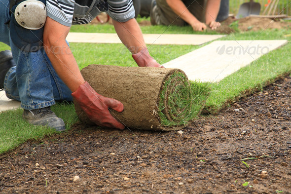 PhotoDune Laying sod for new lawn 1198069
