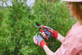 Cutting thuja branches - PhotoDune Item for Sale
