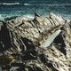 cliffs on the coast - PhotoDune Item for Sale