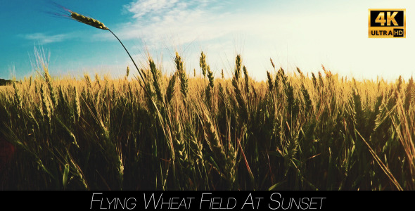 Flying Wheat Field At Sunset