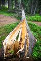 fallen tree - PhotoDune Item for Sale