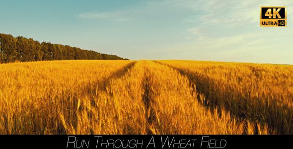 Run Through A Wheat Field 2