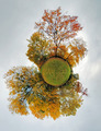 Autumn little planet - Globe with forest - PhotoDune Item for Sale