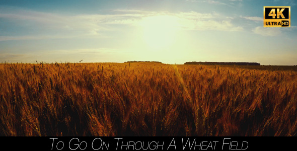 To Go On Through A Wheat Field 5