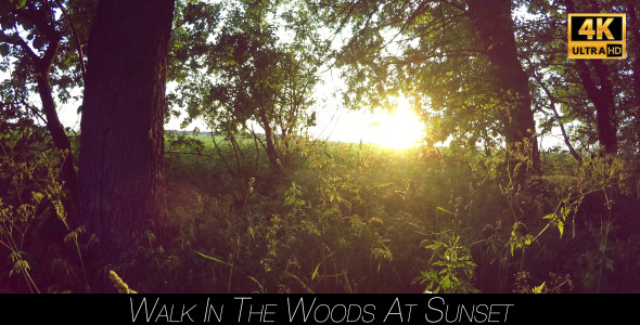 Walk In The Woods At Sunset 2