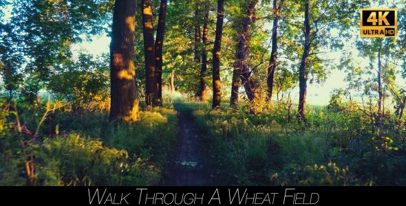 Walk Through The Woods 21