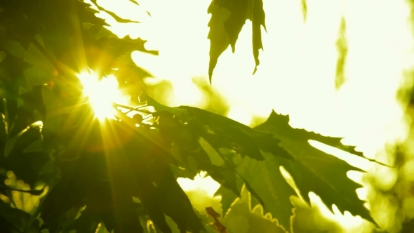 Glowing Tree Leaves