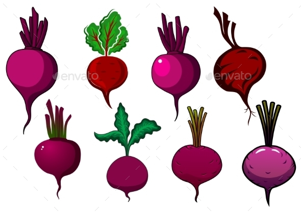 GraphicRiver Purple Beets Vegetables With Stalks And Leaves 11959540