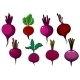 Purple Beets Vegetables With Stalks And Leaves - GraphicRiver Item for Sale