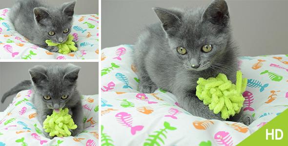 Grey Little Kitten Playing