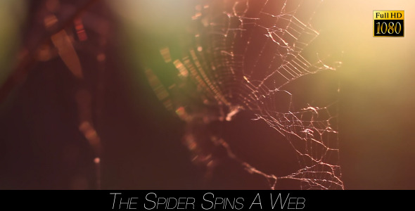 The Spider Spins A Web 7