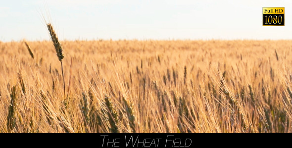The Wheat Field 3